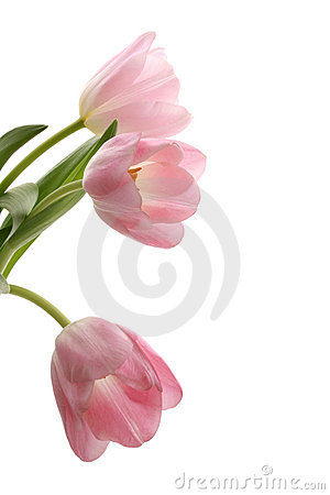 Free Spring Royalty Free Stock Photography - 2070637