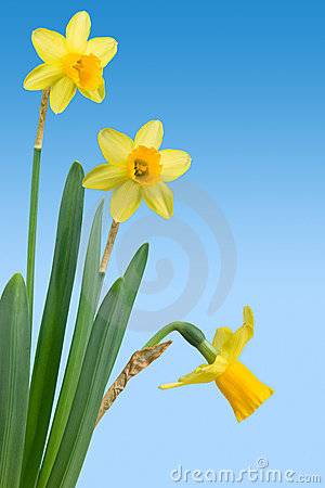 Free Spring Stock Image - 3979091