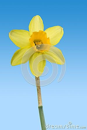 Free Spring Royalty Free Stock Image - 3979116