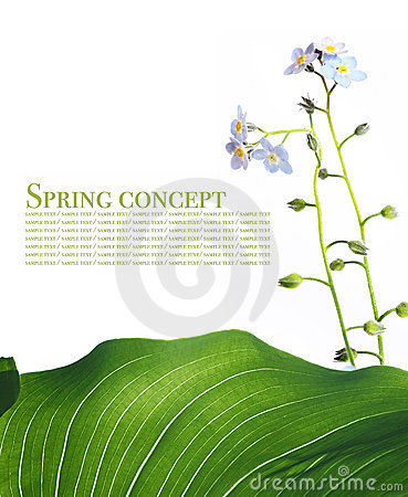 Free Spring Royalty Free Stock Photography - 8811197