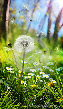 Spring and allergic concept Stock Photo