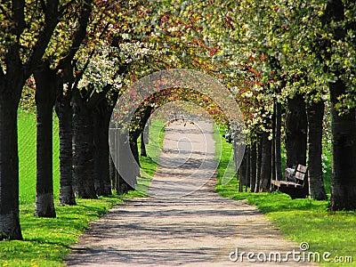 Spring alley