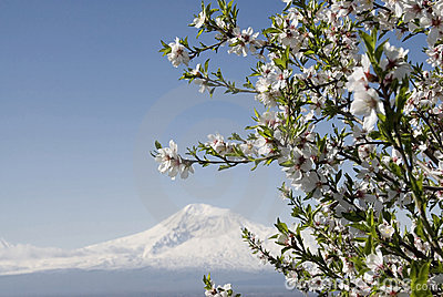 Spring in Ararat valley