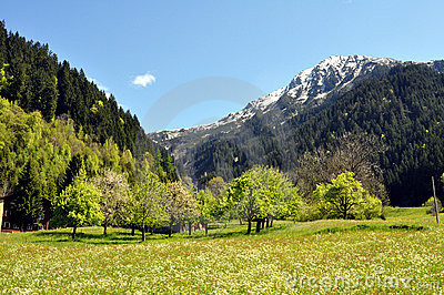 Spring_in_the_Austrian_mountains