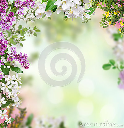 Free Spring Background Royalty Free Stock Images - 32684259