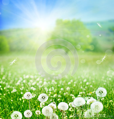 Free Spring Background Stock Images - 41321384