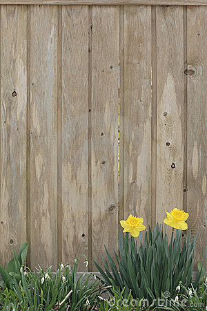 Spring Background Stock Photography Image 675892