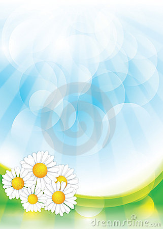 Spring background with Chamomile flowers