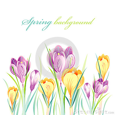 Spring background with crocuses