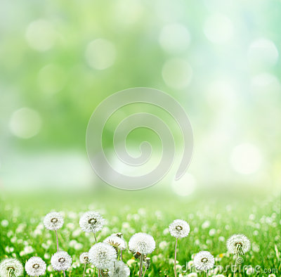 Free Spring Background With Dandelion Royalty Free Stock Photos - 32684218