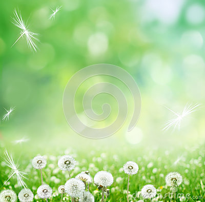 Free Spring Background With Dandelion Royalty Free Stock Photo - 37616685