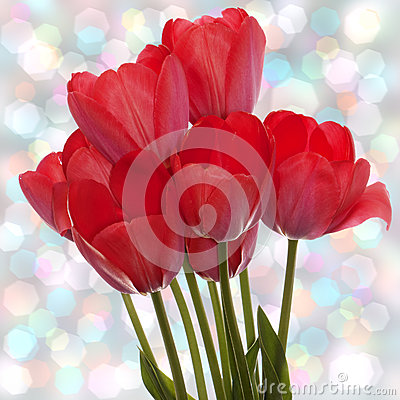 Free Spring  Beautiful Red Tulip Stock Photo - 30897290