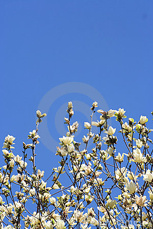 Free Spring Blooming In The Garden Royalty Free Stock Photography - 1655907