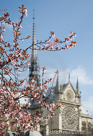 Spring blossom in Paris