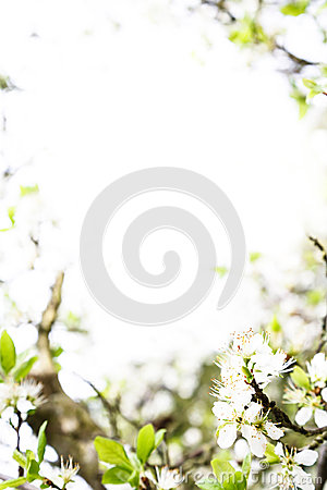 Spring blossom template