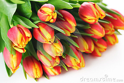 Spring bouquet tulips on white background