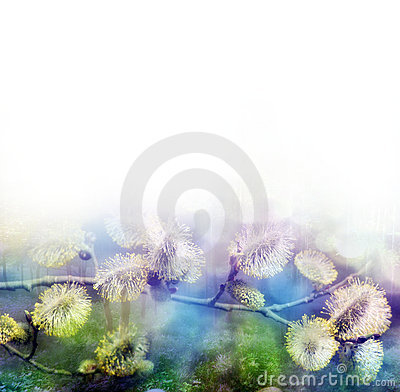 Free Spring Buds Pussy-willow Royalty Free Stock Photo - 13109165