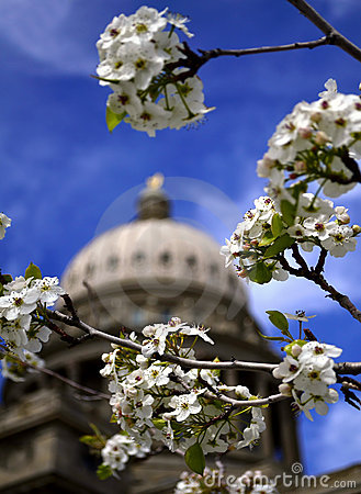 Spring at Capital Building