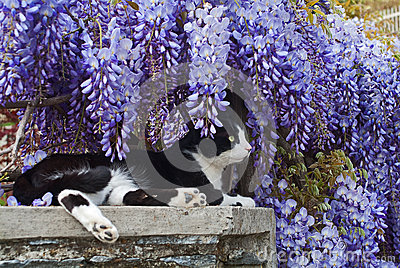The spring and cat