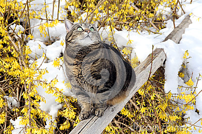 In the spring Stock Photo