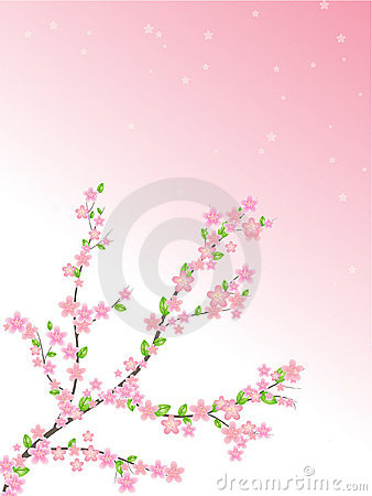 Spring cherry pink and white flowers