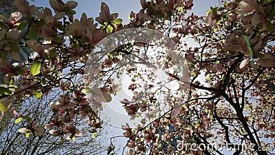 Spring City Modern Urbamn Building Tree Blossom Lense Flare Stock