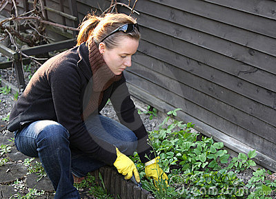 Spring cleaning no jardim