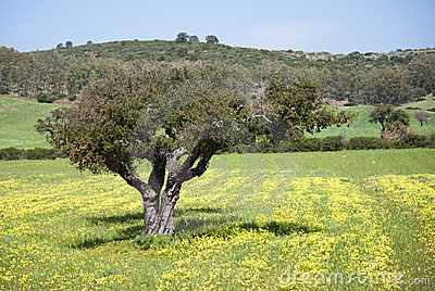 Spring colors in Sardinia