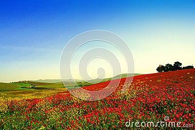 Spring colors, wild flowers pairie landscape