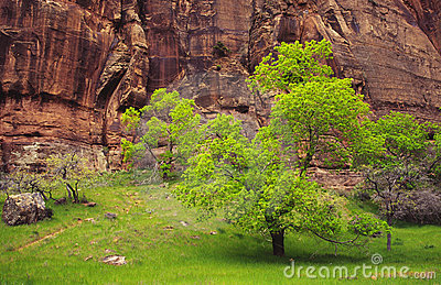 Spring colors in Zion Canyon