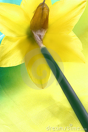 Free Spring Daffodil  Royalty Free Stock Photo - 639965