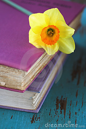 Spring Daffodil flower on pink books