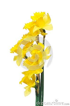 Free Spring Daffodils Border Or Frame Background Stock Image - 31502971