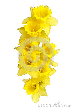 Free Spring Daffodils Border Or Frame Background Stock Images - 31503024
