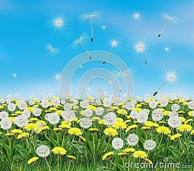 Spring dandelion landscape Illustration