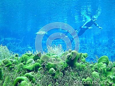 Spring Dive