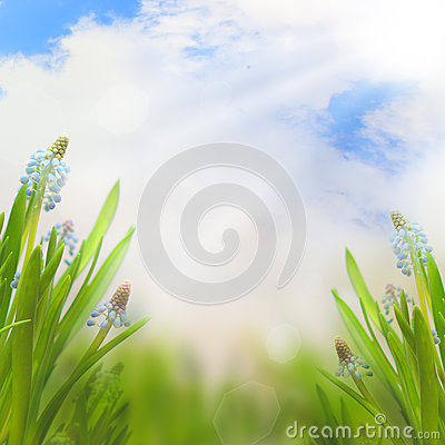 Free Spring Easter Background With Beautiful Flowers Stock Photos - 28688943