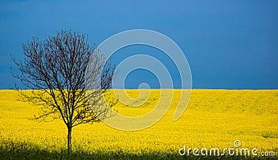 Spring, England