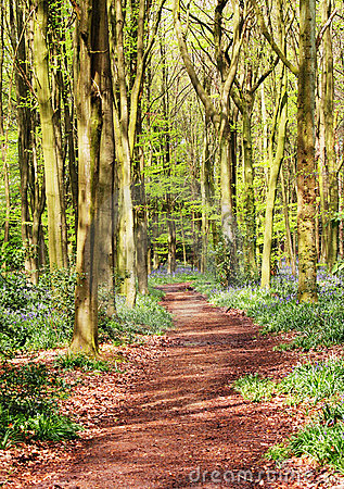Spring in an English Wood