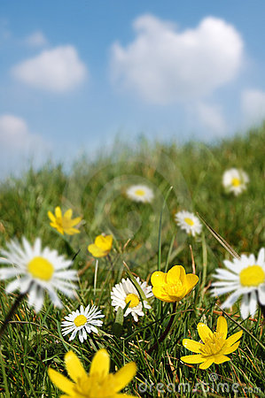 Free Spring Field In Bloom Royalty Free Stock Images - 2233809
