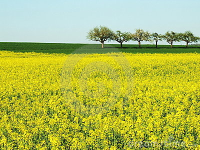 Spring Field With Trees Royalty Free Stock Photos - Image: 2259578