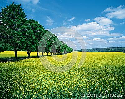 Spring fields & allee