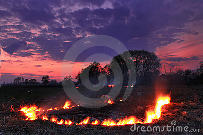 Spring fires in a field