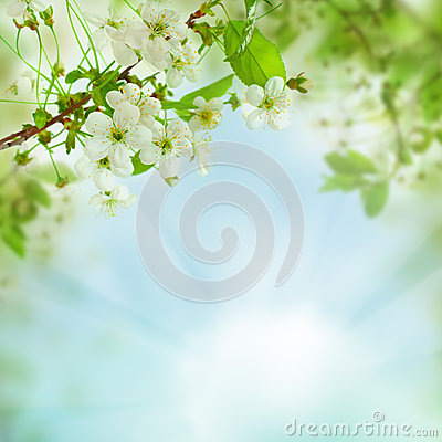 Spring floral background - abstract nature concept Stock Photo