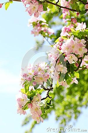 Free Spring Flower Royalty Free Stock Photo - 14152915