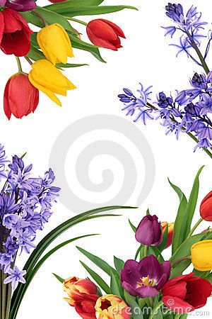 Free Spring Flower Border Stock Photos - 23434403