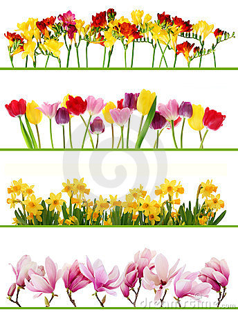 Free Spring Flower Borders Royalty Free Stock Photo - 23736435