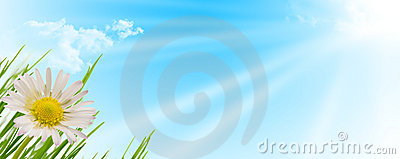 Spring flower, grass and sun background