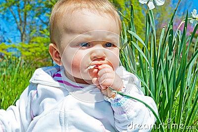 Spring Flower Munch