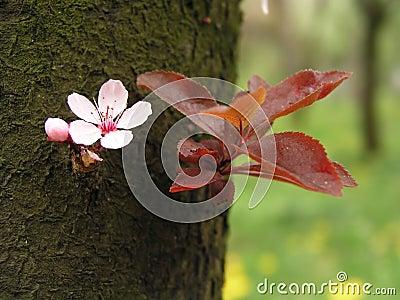 Spring flower on tree bark